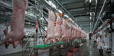 生猪屠宰设备供货商