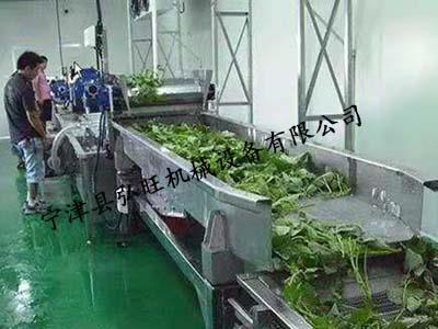 油麥菜清洗機廠家