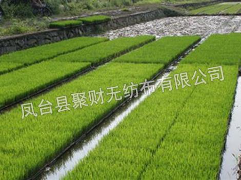 水稻育秧盤生產廠家
