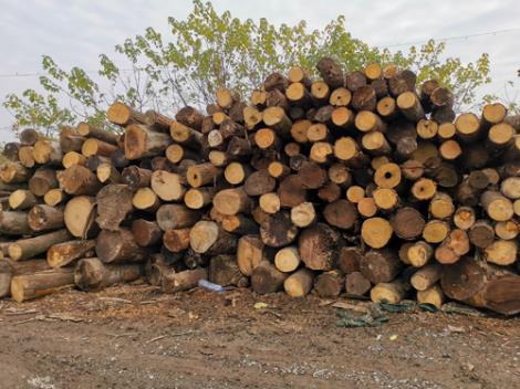 雜木木托盤