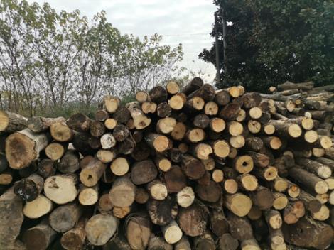 雜木木托盤定制