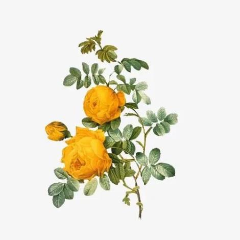 花卉价值评估