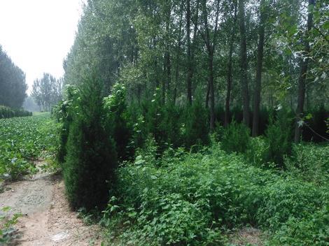 林业评估资质