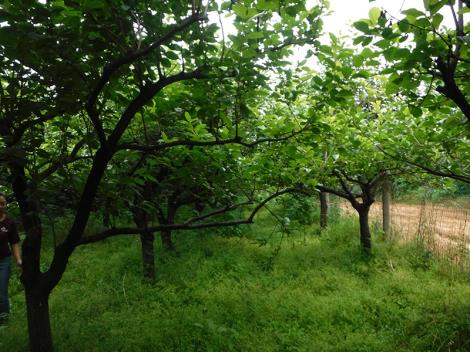 树木评估资质