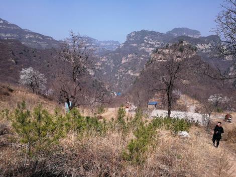 景观工程损失价值鉴定