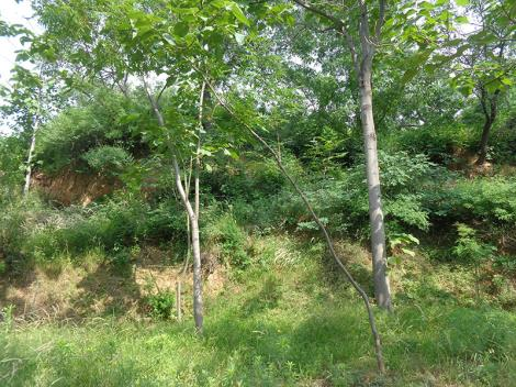 森林景观评估资质