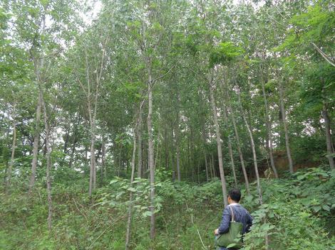 森林景观损失价值鉴定